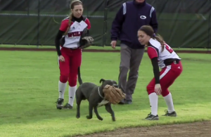 wou_softball_dog_header