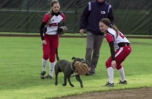 wou_softball_dog_header
